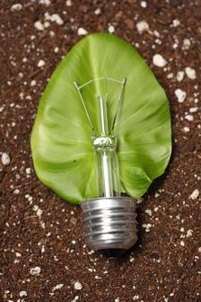 Fokus på grøn energi og en bæredygtig fremtid