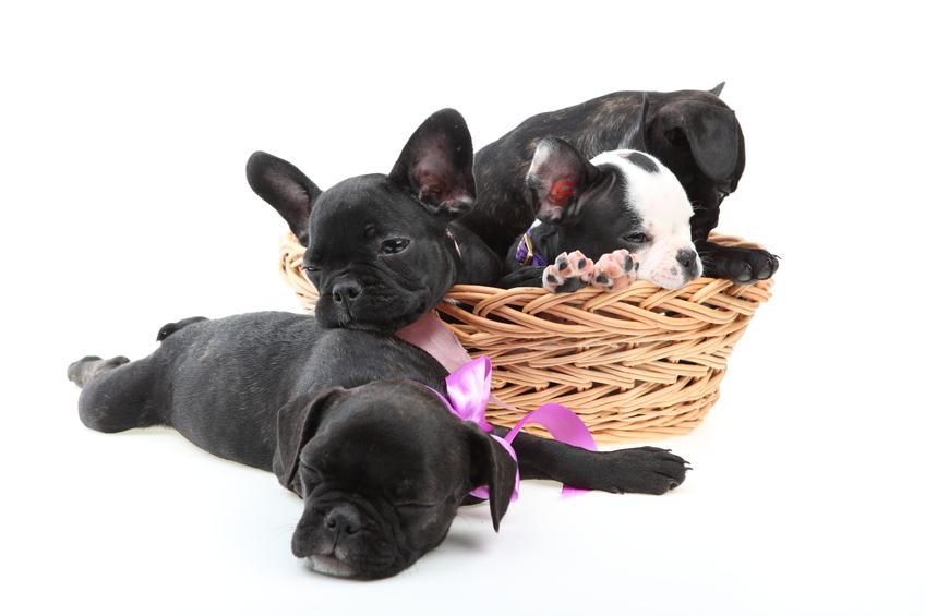 Må man tage sin hund med i sommerhus?